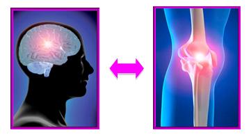brain_knee_osteoarthritis